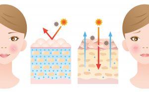 skin barrier healthy skin